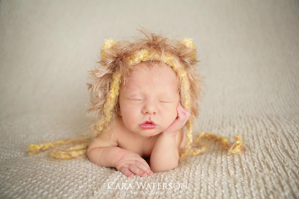 newborn lion